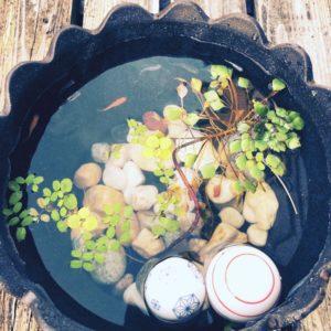 営業さんがメダカを飼い始められました(^^)このおしゃれな鉢は信楽焼きだそうです☆写真を見ているだけでとても涼しい気持ちになってきますね(*^_^*)