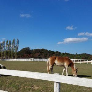 ブルーメの丘のお馬さん🐎近くなのでフラッと散歩がてらに行ったのに満喫してしまいました☆☆