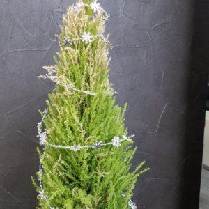 事務所の観葉植物ちゃん達もクリスマス仕様にチェンジ🎄🌟是非皆様お立ち寄りください~♬