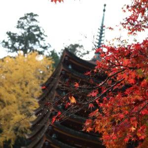 奈良に紅葉を見に行きました🍁