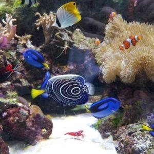 京都水族館のお魚さん🐠イルカのショーはクリスマス仕様になっておりました🎄✨