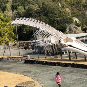 シロナガスクジラの骨格標本!海は広いですね。。