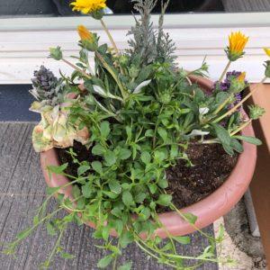 入り口の寄せ植えも新しく!手前には青いお花が沢山咲きます❀今から楽しみです!