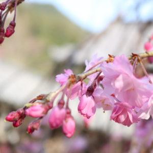 天気も良く春を感じました(^^)