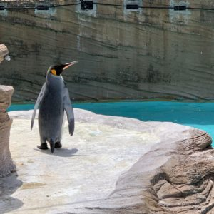 東山動植物園🦍に行ってきました★★イケメンゴリラさんにはお会いできなかったので次回チャレンジします!