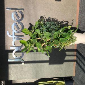 入口の観葉植物が新しくなりました!寄せ植えになっているので色んな植物が楽しめます☆お越しの際はぜひご覧になってください(^^)