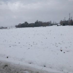 本日の日野町方面は朝から雪が積もっていました☃お出かけの際には十分注意してください(>_<)!
